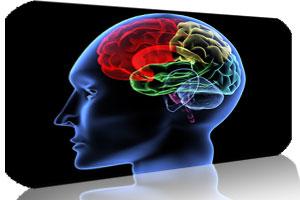 سه بخش مغز و راه ارتباط موثر